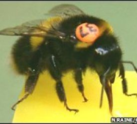 Bees join hunt for serial killers