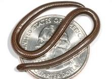 _44884355_snake