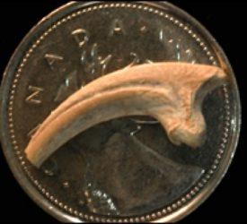 Canadian dig yields tiny dinosaur