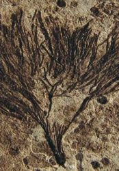 Ancient 'Seaweed' Rewrites History