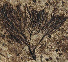 Ancient 'Seaweed' Rewrites History