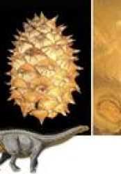 Dinosaur Munchies May Have Bulked Up Pinecones