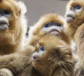 Primates leapt to social living