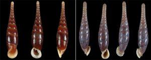 sn-snails